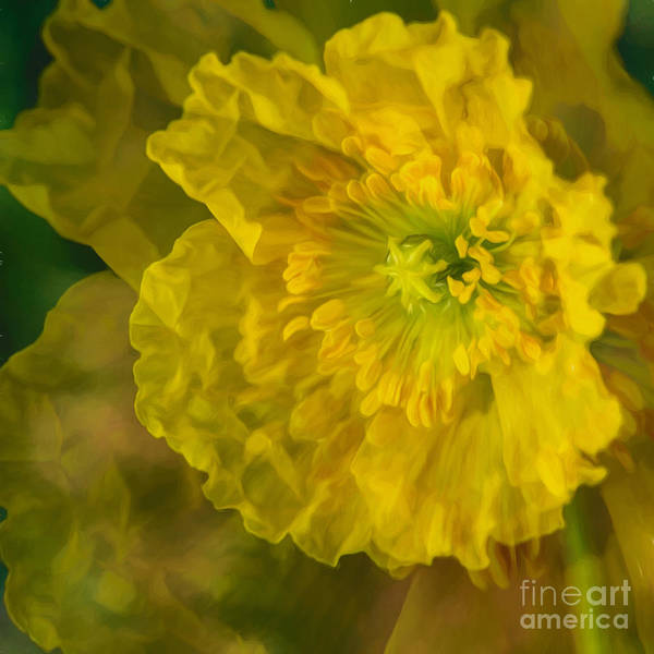 Poppies Digital Art - Yellow Poppy by Veikko Suikkanen