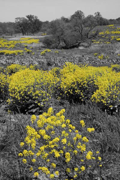 Photograph - Yellow Prairie II by Dylan Punke