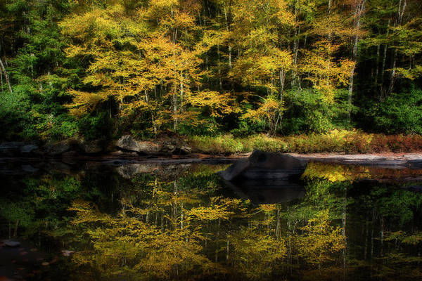 Photograph - Yellow Reflections by Dan Friend