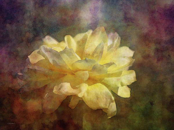 Photograph - Yellow Rose 0169 Idp_2 by Steven Ward