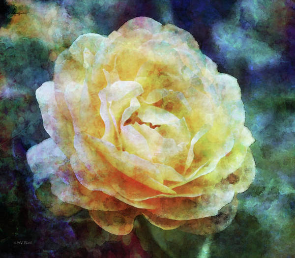 Photograph - Yellow Rose 0366 Idp_3 by Steven Ward