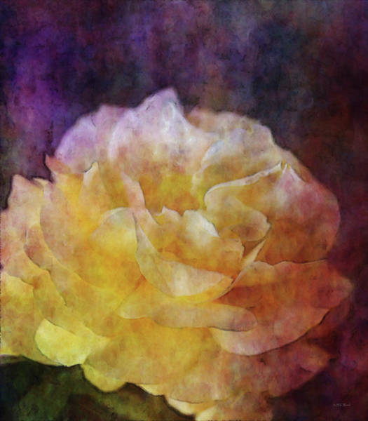 Photograph - Yellow Rose 0368 Idp_22 by Steven Ward