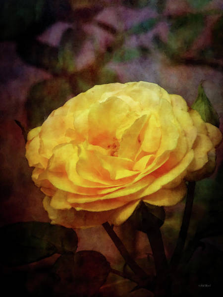 Photograph - Yellow Rose 0994 Idp_2 by Steven Ward