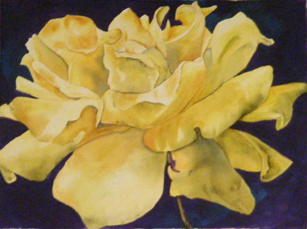 Yellow Rose 101 Art Print