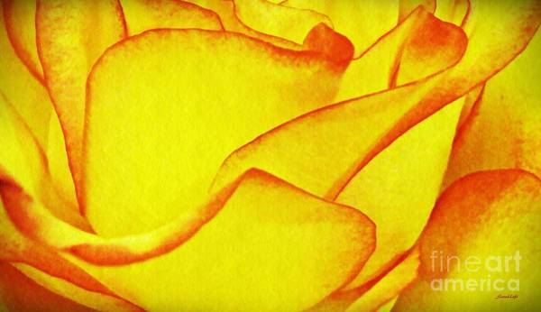 Sarah Photograph - Yellow Rose Abstract by Sarah Loft