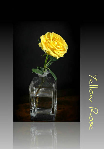 Wall Art - Photograph - Yellow Rose by Diana Angstadt
