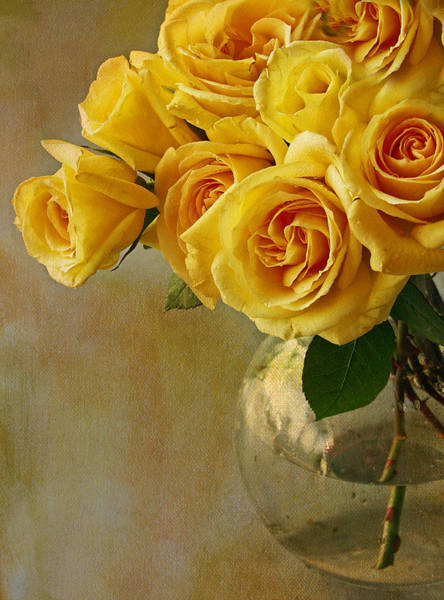 Yellow Rose Photograph - Yellow Rose Of... by Rebecca Cozart