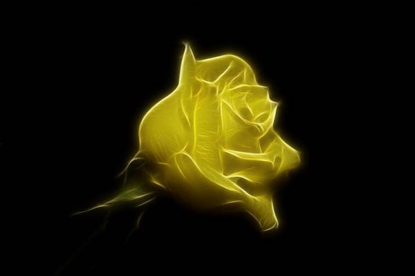 Photograph - Yellow Rose by Sandy Keeton