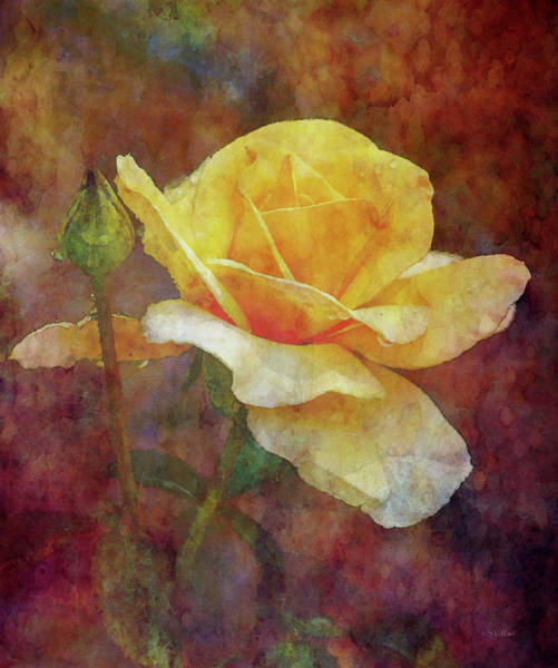 Photograph - Yellow Rose With Raindrops 3590 Idp_2 by Steven Ward