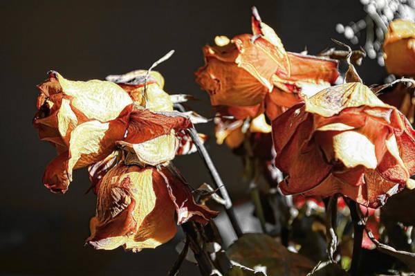 Wall Art - Pyrography - Yellow Roses #1 by Leyla Munteanu