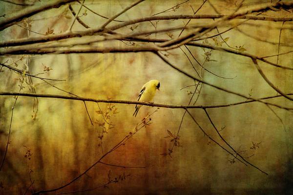 Painting - Yellow Songbird In Morning Prayer by Christina VanGinkel