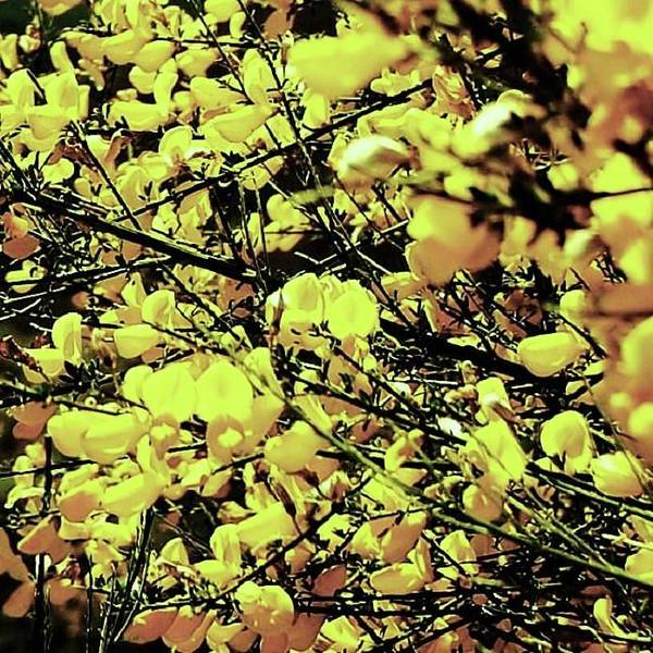 Photograph - Yellow Spray by HweeYen Ong