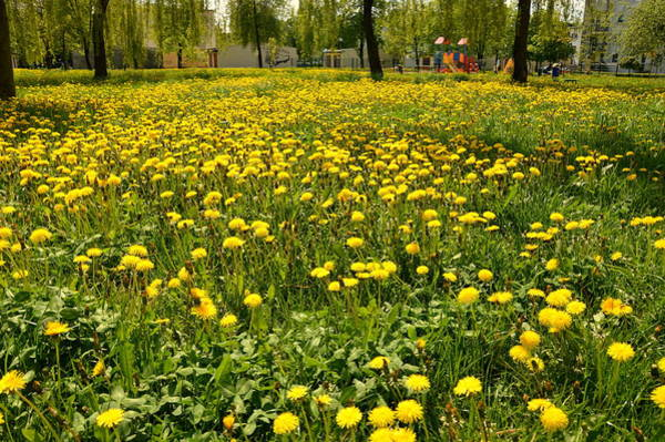 Gorecki Photograph - Yellow Spring Carpet by Henryk Gorecki