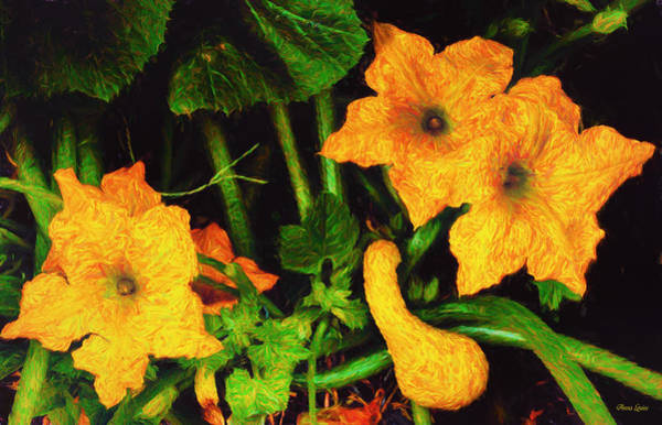 Photograph - Yellow Squash Blossoms In Garden by Anna Louise