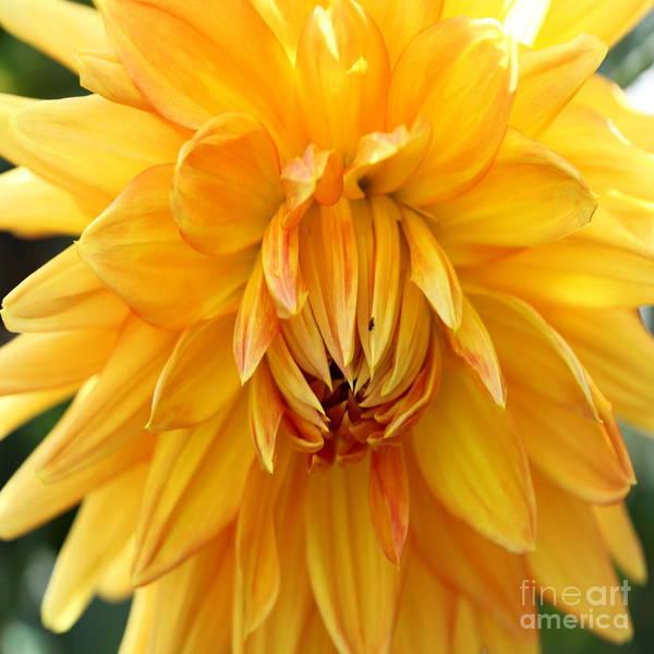 Wall Art - Photograph - Yellow Sun - Duvet Covers  by Christiane Schulze Art And Photography