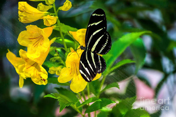 Photograph - Yellow by Susan Warren