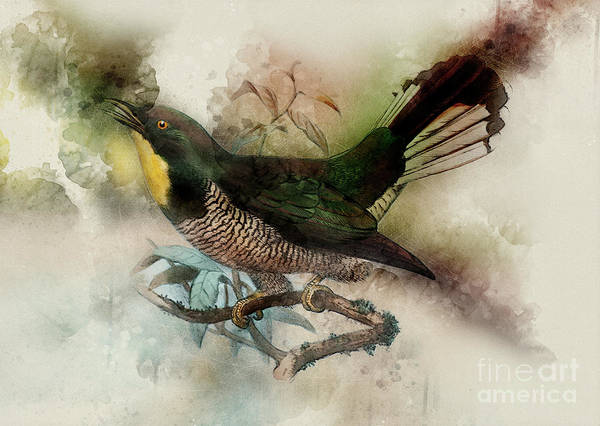 Cuculidae Photograph - Yellow-throated Cuckoo A  by Humorous Quotes
