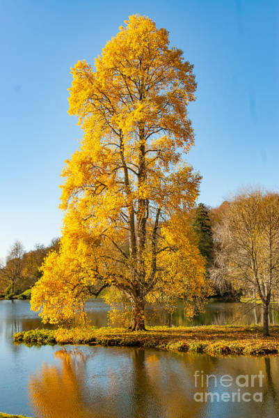 Photograph - Yellow Tree by Colin Rayner