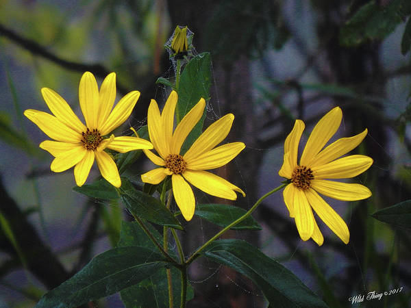 Photograph - Yellow Trined by Wild Thing