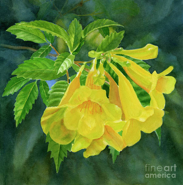 Yellow Trumpet Wall Art - Painting - Yellow Trumpet Flowers With Dark Background by Sharon Freeman