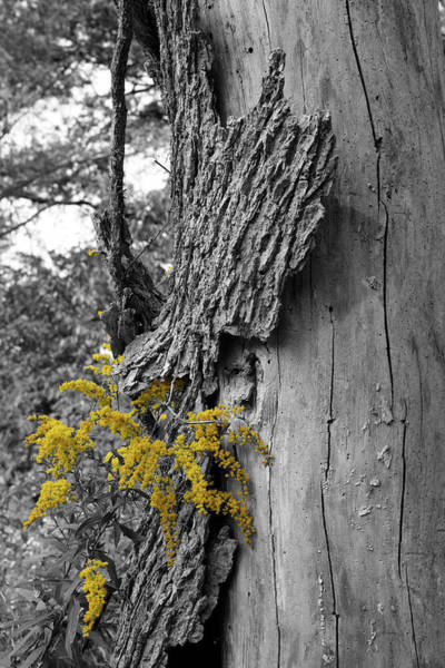Photograph - Yellow Tufts by Dylan Punke