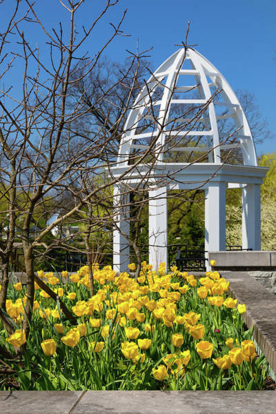 Columbus Wall Art - Photograph - Yellow Tulips And Gazebo by Tom Mc Nemar