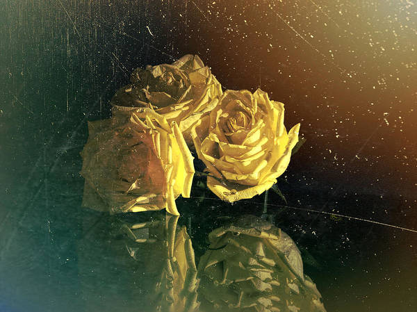 Photograph -  Yellow Vintage Roses  by OLena Art Brand
