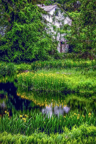 Photograph - Yellow Water Iris by Kendall McKernon