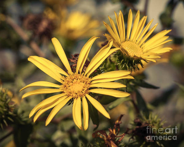 Wall Art - Photograph - Yellow Wild Flowers 2 by Lucid Mood