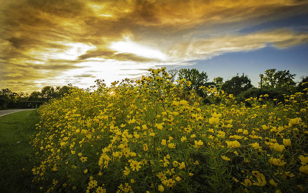 Photograph - Yellow Wild Flowers by Francisco Gomez