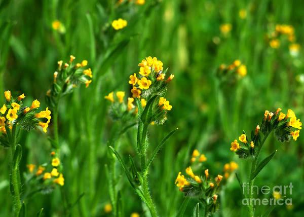 Photograph - Yellow Wildflower Photograph by Kristen Fox