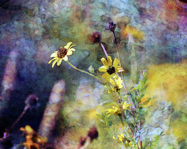 Photograph - Yellow Wildflowers 3230 Idp_2 by Steven Ward
