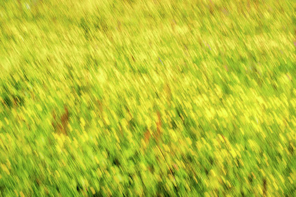 Photograph - Yellow Wildflowers Abstract - Romania by Stuart Litoff