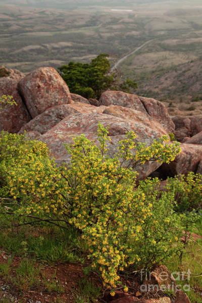 Wall Art - Photograph - Yellow Wildflowers In The Mountains by Iris Greenwell