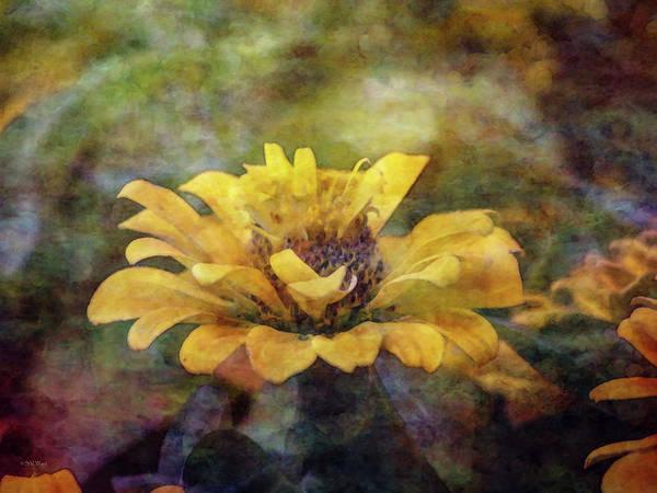 Photograph - Yellow Zinnia 2755 Idp_2 by Steven Ward