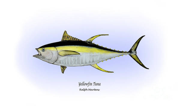 Angling Art Wall Art - Painting - Yellowfin Tuna by Ralph Martens