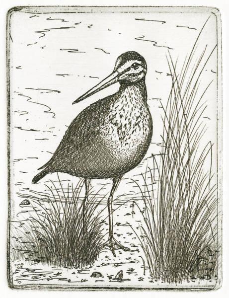 Drawing - Yellowlegs Shorebird by Charles Harden