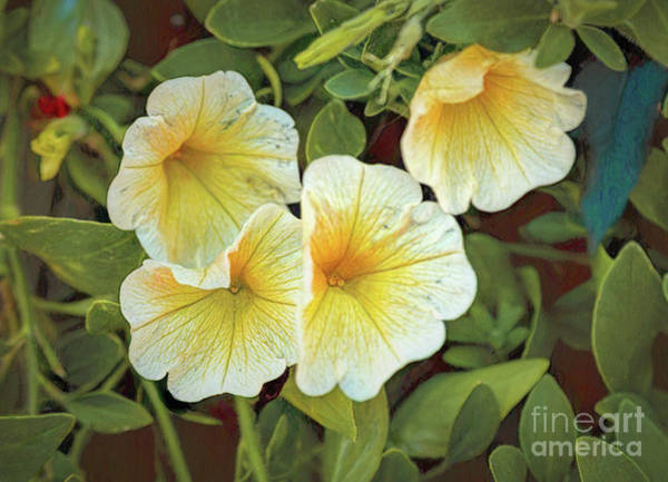Photograph - Yellows And Whites And Greens by Jon Burch Photography
