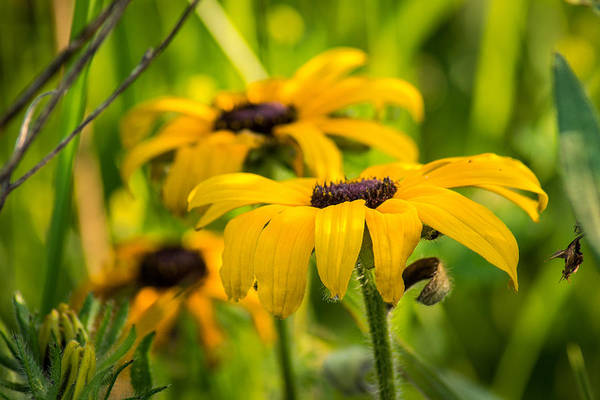 Wall Art - Photograph - Yellows In The Wild by Bill Pevlor