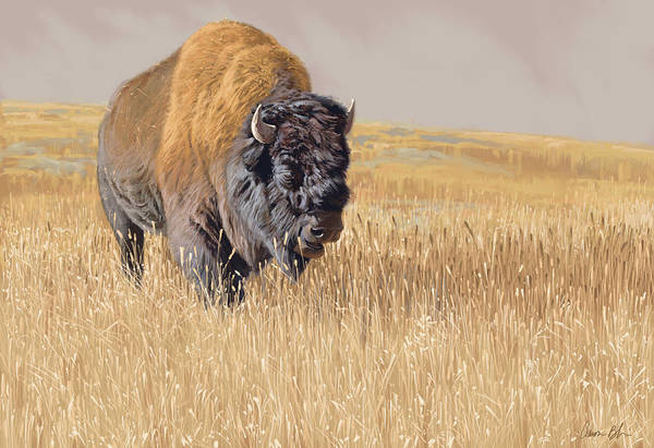 Wall Art - Digital Art - Yellowstone King by Aaron Blaise