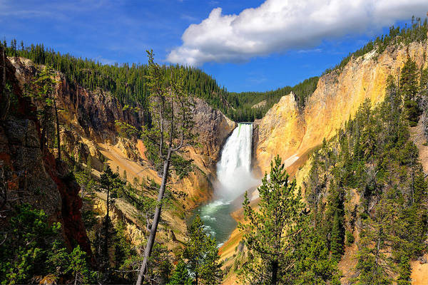Photograph - Yellowstone Lower Falls by Greg Norrell