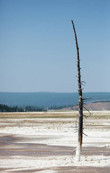 Wall Art - Photograph - Yellowstone National Park by Kati Finell