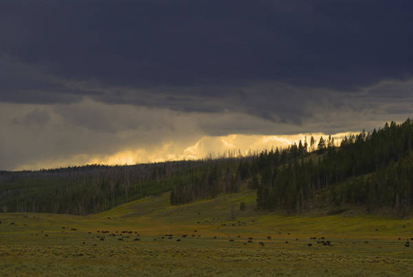 Prarie Photograph - Yellowstone Prarie by Patrick  Flynn
