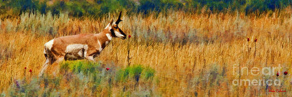 Photograph - Yellowstone Pronghorn And Rose by Blake Richards