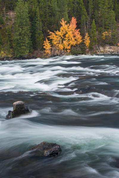 Photograph - Yellowstone River by Gary Lengyel