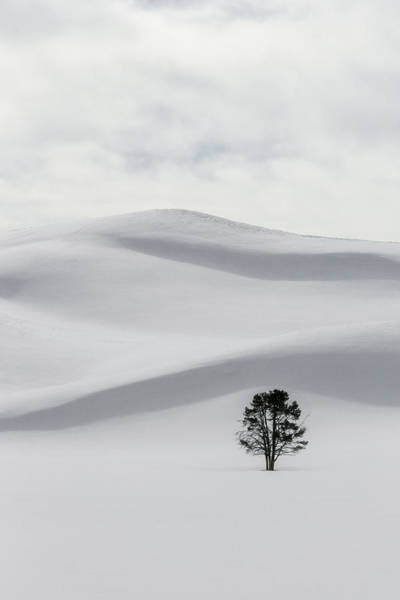 Photograph - Yellowstone Solitude by Wes and Dotty Weber