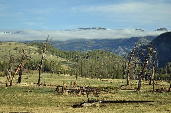 Photograph - Yellowstone Transitions by Bruce Gourley
