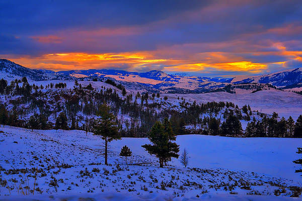 Photograph - Yellowstone Winter Morning by Greg Norrell