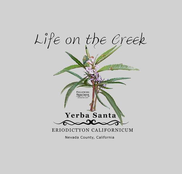 Digital Art - Yerba Santa by Lisa Redfern