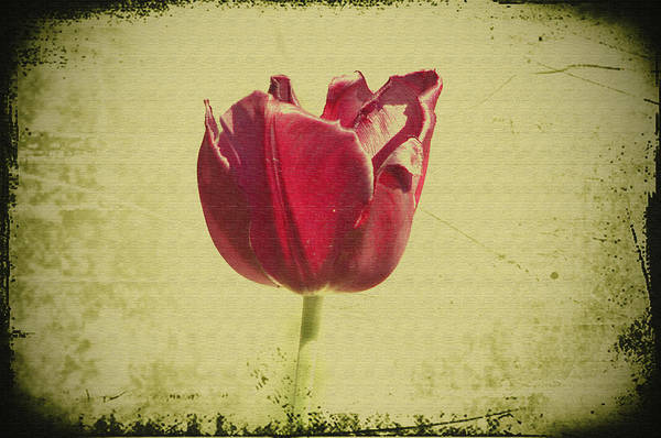 Yesterday Photograph - Yesterday's Flower by Bill Cannon
